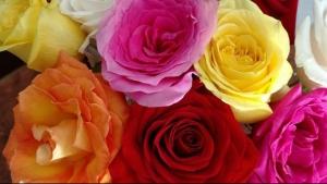 flowers-2897542__340